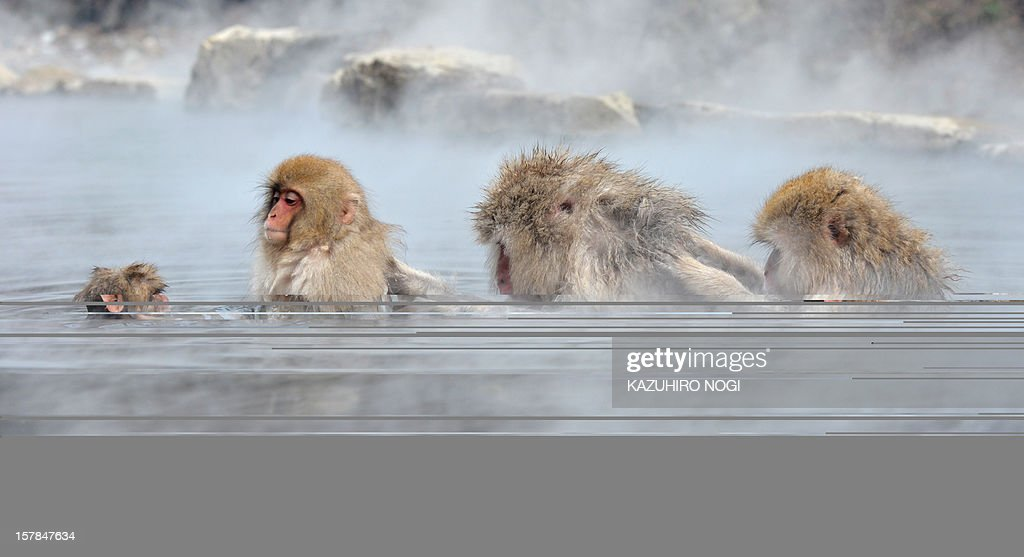 Japanese macaque, commonly referred to as 'snow monkeys', take an open-air hot spring bath, or 'onsen' at the Jigokudani (Hell's Valley) Monkey Park in the town of Yamanouchi, Nagano prefecture on December 7, 2012. Some 160 of the monkeys inhabit the area and are a popular tourist draw.