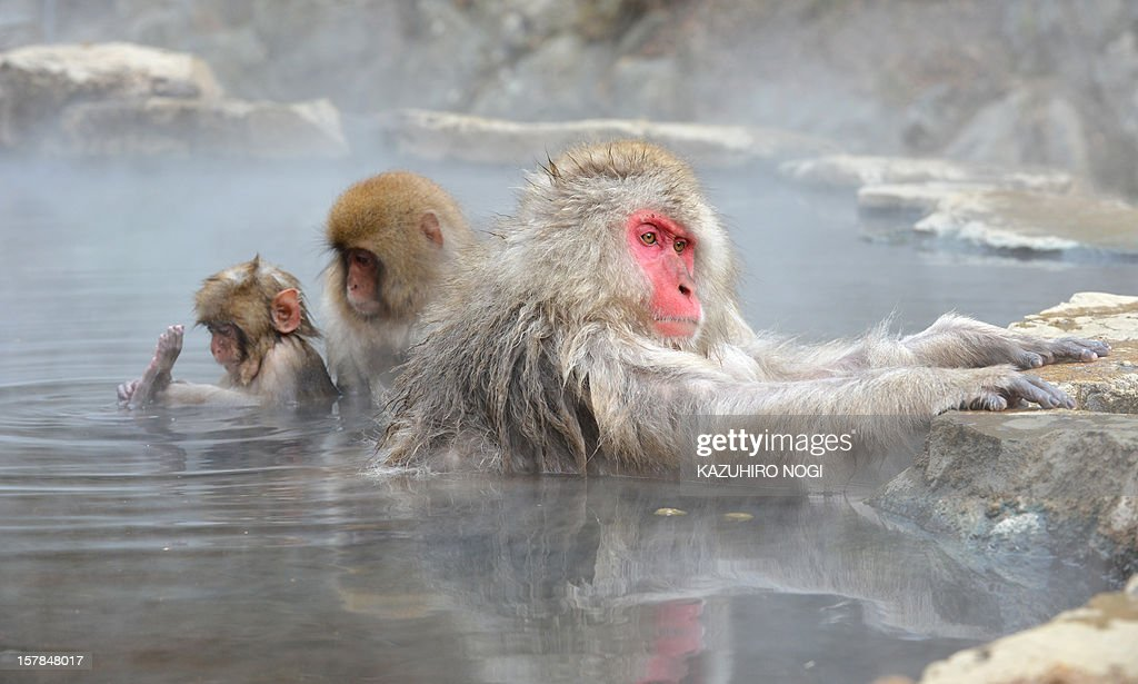 Japanese macaque, commonly referred to as 'snow monkeys', take an open-air hot spring bath, or 'onsen' at the Jigokudani (Hell's Valley) Monkey Park in the town of Yamanouchi, Nagano prefecture on December 7, 2012. Some 160 of the monkeys inhabit the area and are a popular tourist draw. AFP PHOTO / KAZUHIRO NOGI