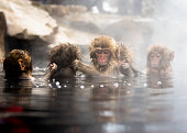Japanese Macaque in a hot spring, Nagano Prefecture, Japan