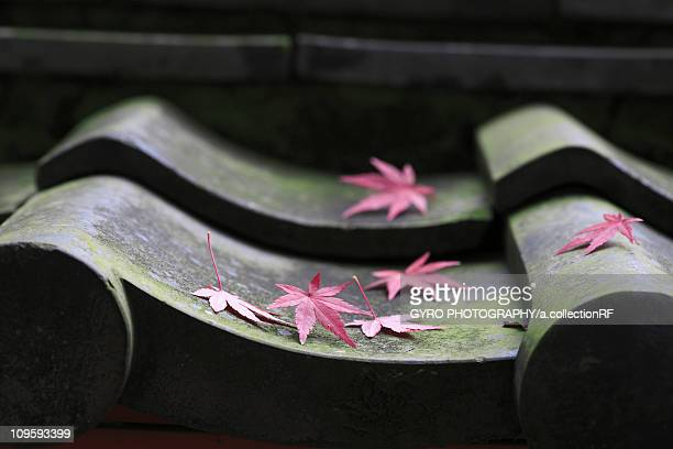 Japanese maple leaves on roof tile , Nara Prefecture, Honshu, Japan