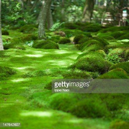 Japanese moss garden, Kyoto