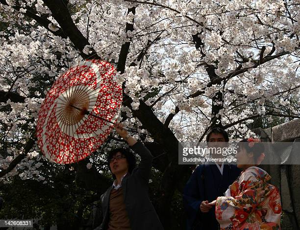 Japanese newlywed couple have their wedding photographs taken under blossoming cherry blossoms at Osakajokoen on April 9 2012 in Osaka Japan
