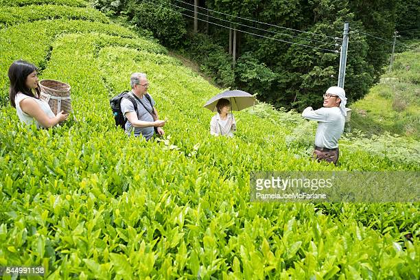 Japanese Organic Tea Farmer Showing Tourists How to Pick Leaves