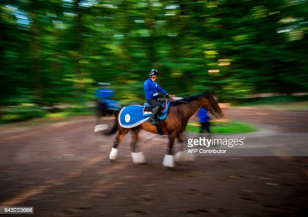 Japanese owned horse Satono Diamond takes part in a training session at Chantilly on September 6 ahead of the Prix de l'Arc de Triomphe / AFP PHOTO /...