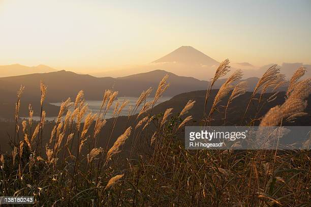 Japanese pampas grass and Mt.Fuji