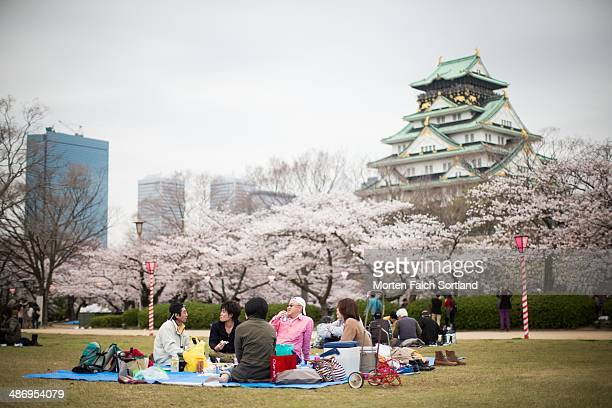Japanese people eating brunch in the park in Osaka Japan in front of the magnificent Osaka Castle Sakura Japanese cherry blossoms are blooming in the...