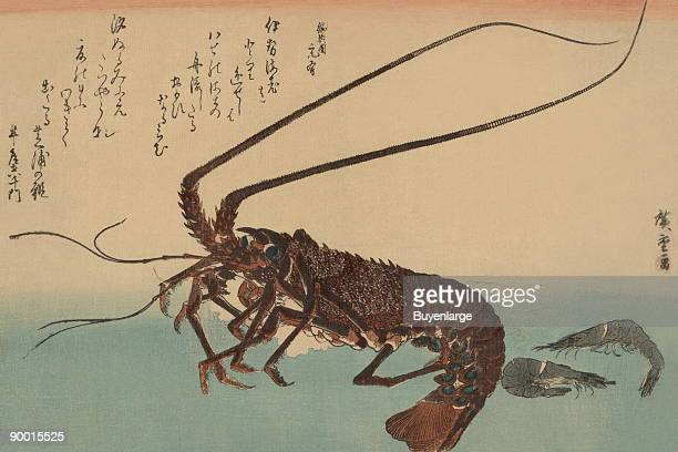 Japanese print showing a shrimp and a lobster from the series Uo zukushi A complement of fish Done by Ando Hiroshige between 1835 and 1844