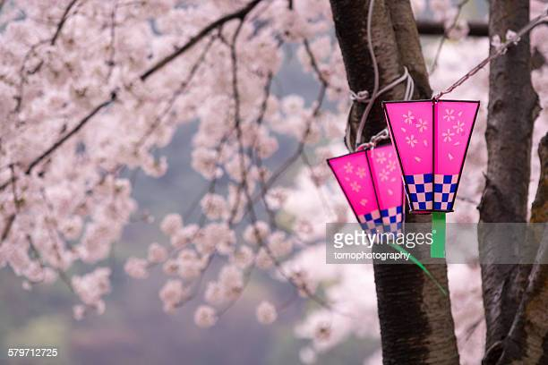 Japanese sakura blossom and lantern