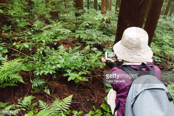 Japanese Senior Woman Enjoy Taking Photos in Forest with Smart Phone Device