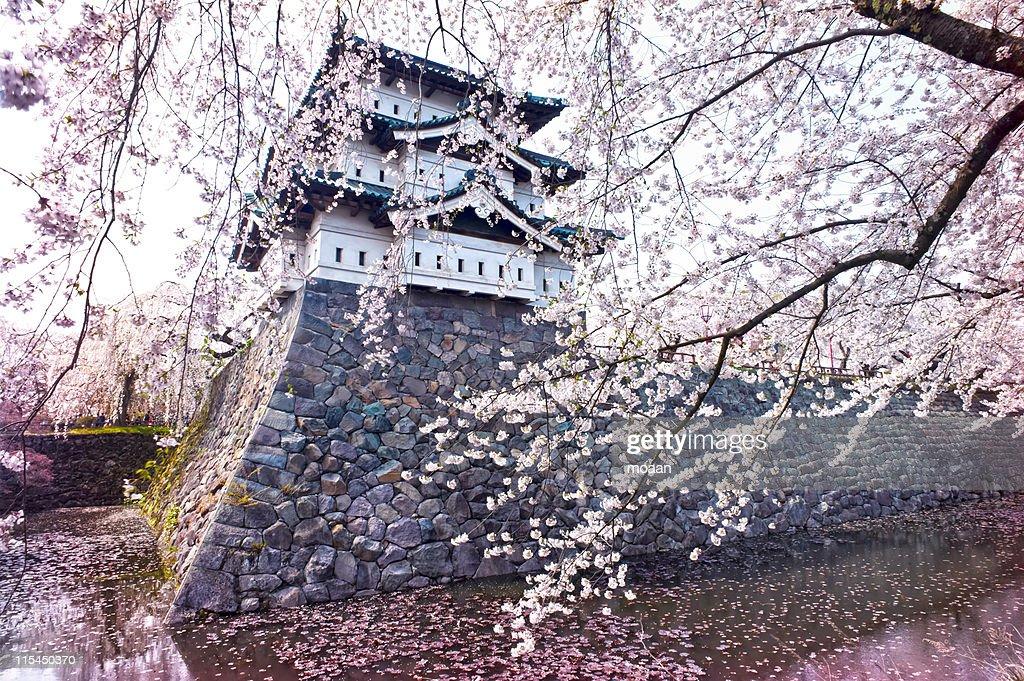 Japanese spring : Stock Photo