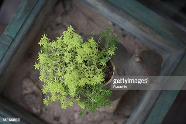 Japanese style, flower pot