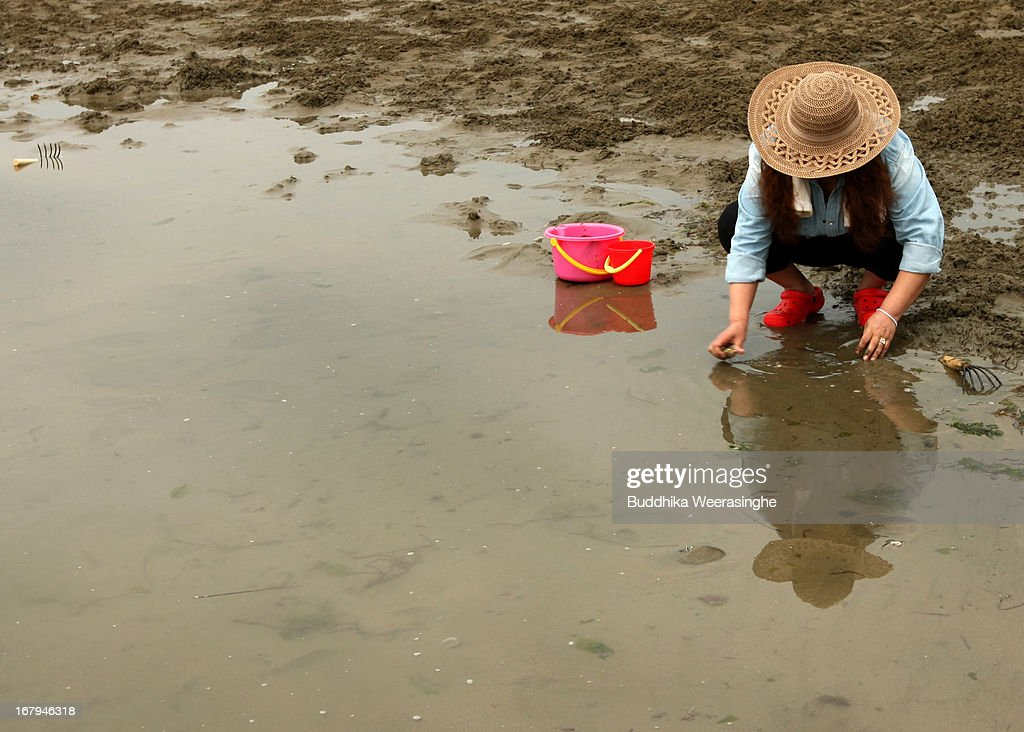 A Japanese woman collects shells at Shinmaiko beach on May 3, 2013 in Himeji, Japan. Shell collecting are one of most famous pleasure events around the country during the longest spring holiday known as 'Golden Week'. Japan holds the Golden Week holidays from April 28 to May 6, during that period millions of Japanese people travel to tourist attractions.