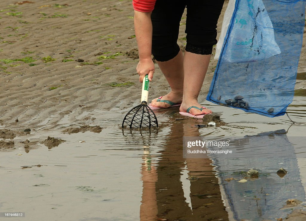 A Japanese woman digs the soil as she collects shells at Shinmaiko beach on May 3, 2013 in Himeji, Japan. Shell collecting are one of most famous pleasure events around the country during the longest spring holiday known as 'Golden Week'. Japan holds the Golden Week holidays from April 28 to May 6, during that period millions of Japanese people travel to tourist attractions.