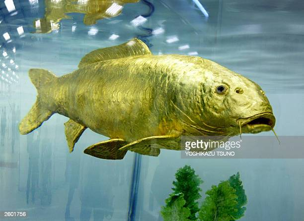 Japan's machinery giant Mitsubishi Heavy Industries' subsidiary Ryoumei Engineering unveils the new fish robot swimming in a fish tank in Tokyo 15...