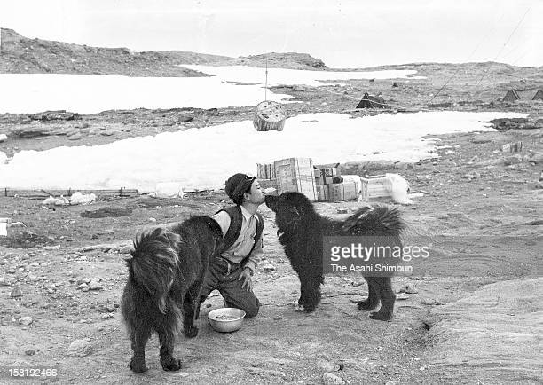 Japan's third Antactic Observation Team member Taiichi Kitamura feeds to Taro and Jiro at Showa station on Janaury 14 1959 in Antarctica Sakhalin...