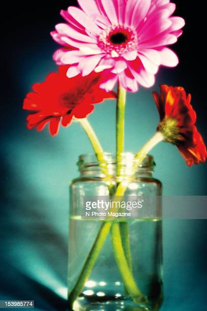 A jar with brightly coloured Gerbera daisies taken on February 10 2012