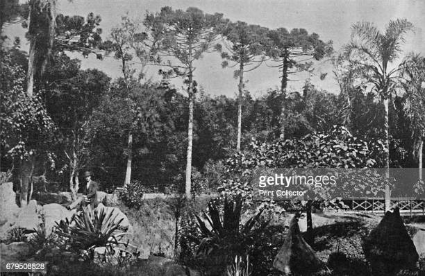 Jardim Publico' 1895 From Sao Paulo by Gustavo Koenigswald [S Paulo 1895] Artist Wilhelm Gaensly Rudolf Friedrich Fra