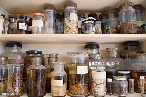 Jars of biological specimens