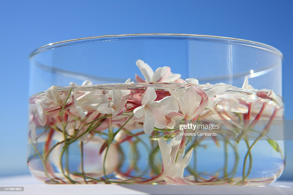 Jasmine flowers floating in water stock photo getty images for Floating flowers in water