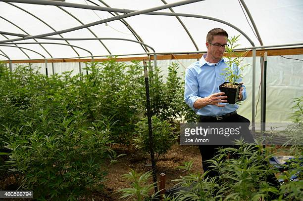 Jason Cranford botanist specializing in the organic cultivation of medical grade marijuana including Haleighs Hope a 11 CBD oil in one of his outdoor...