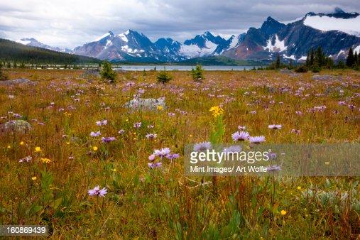 Jasper National Park, Alberta, Canada : Stock Photo