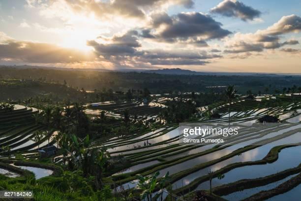 Jatiluwih Rice Terraces during sunrise in Bali, Indonesia.