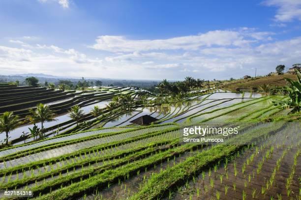Jatiluwih Rice Terraces in Bali, Indonesia.