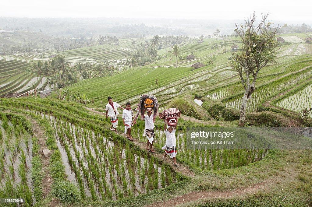 Jatiluwih, tourist, travel, Bali, beautiful, rice terrace, rice, paddies, field, Indonesia, travel, scene, children, Ogoh, mask, green