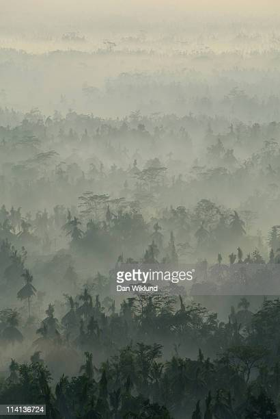 Java forest sunrise