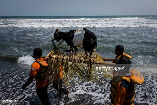 Javanese people carry an offering of goat as they prepare to throwing into the sea during the rituals labuhan '1st Suro' during Islamic New Year...