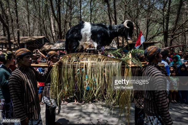 Javanese people carry an offering of goat during the rituals labuhan '1st Suro' during Islamic New Year celebrations at Goa Cemara beach on September...