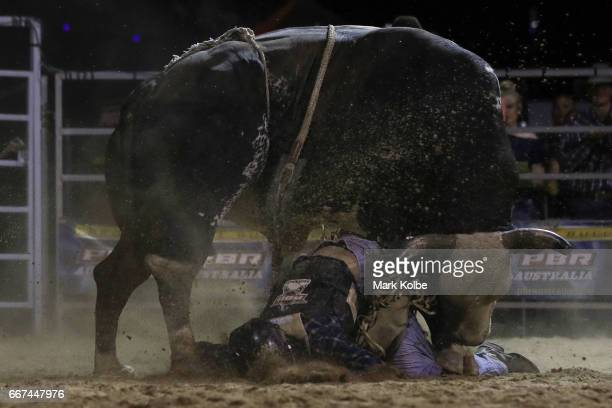 Jay Borghero of Rockhampton is turned on by the bull Hotter Than Hell 2 after being thrown while competing during the Julia Creek Dirt 'n' Dust PBR...