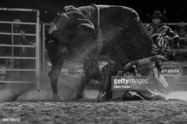 Jay Borghero of Rockhampton tries to evade being hit by the bull Hotter Than Hell 2 after being thrown while competing in the PBR Bull Riding...