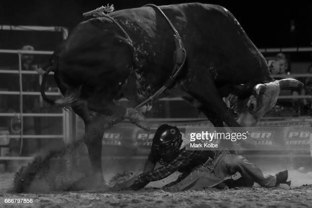 Jay Borghero of Rockhampton tries to evade being hot by the bull Hotter Than Hell 2 after being thrown while competing in the PBR Bull Riding...