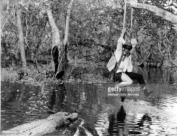 JeanPaul Belmondo hangs in a tree in a scene from the United Artist movie 'That Man from Rio' circa 1964