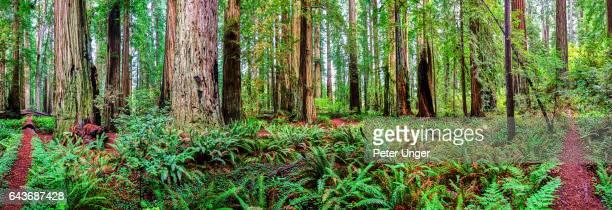 Jedediah Smith Redwood State Park,California