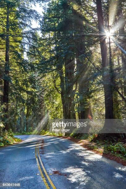 Jedediah Smith Redwoods State Park,California,usa