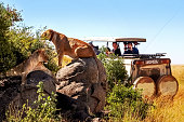 Africa, Tanzania, Serengeti National Park - March 2016: Jeep tourists photograph the pride of the lions.
