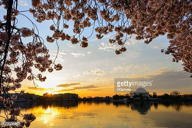 Jefferson Memorial framed by cherry blossoms at dawn