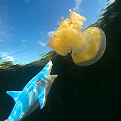 Jellyfish Lake, Palau, Micronesia. Pacific Ocean