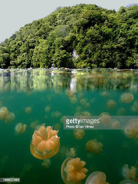 Jellyfish Overunder