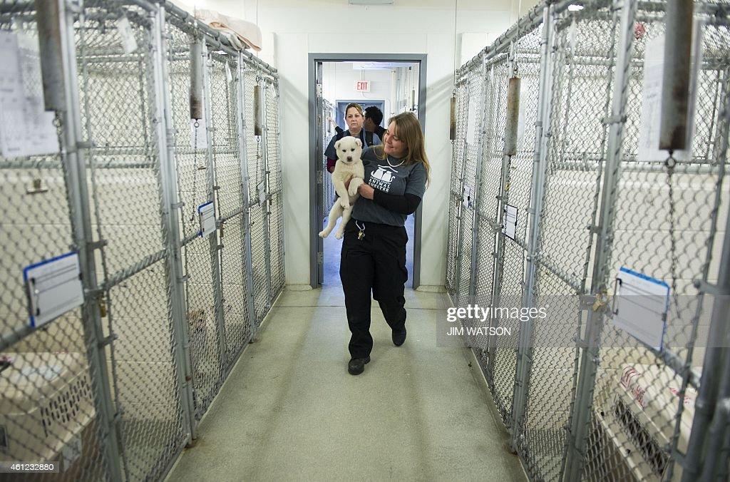 Dog Adoption Alexandria Va
