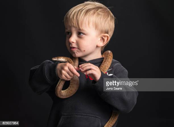 Jensen Harrison an Australian boy from Queensland plays with a Stimson's python Jensen has grown up handling nonvenomous snakes as his father is a...