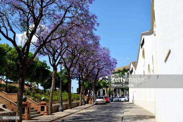 Jerez de La Frontera city in spring
