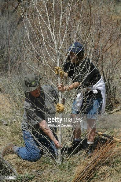 Jerilyn Lopez and her daughter Danae plant a cottonwood tree on the banks of the Puerco River in the Rio Puerco Reserve April 26 2003 near Cuba New...