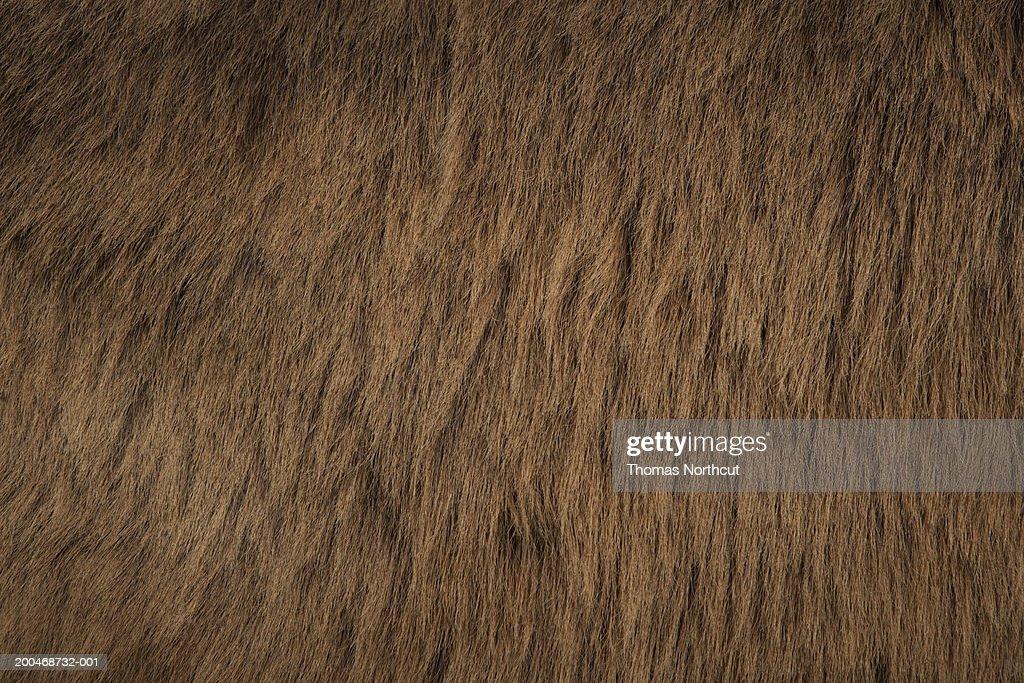 Jerusalem donkey, close-up of fur : Stock Photo