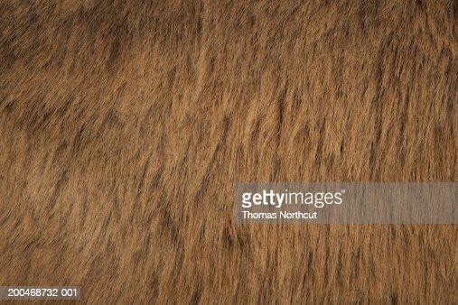 Jerusalem donkey, close-up of fur
