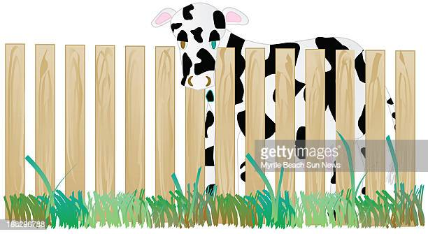 Jesi Kane color illustraiton of cow behind a fence The Sun News /MCT via Getty Images