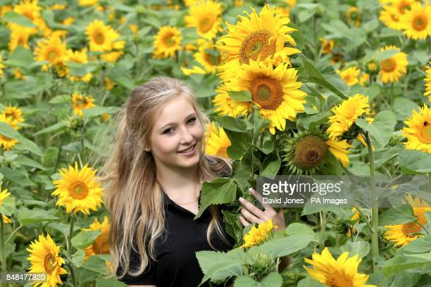 Jess Deyus among the four acres of sunflowers at her home on Bannersbrook Farm near Worcester today
