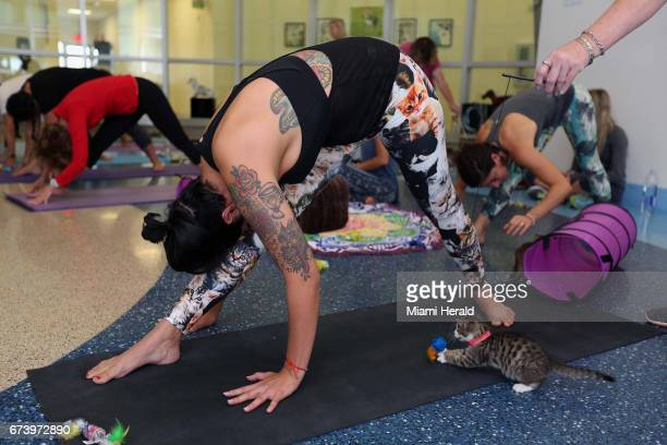 Jessica Almendares during the first yoga with cats workshop on Saturday April 22 2017 at Miami Dade Animal Services in Doral Fla